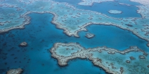 Barrier Reef business boost